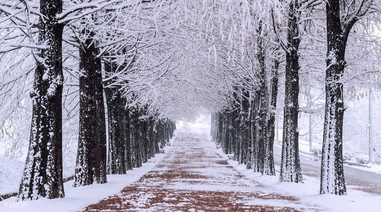 Hình ảnh con đường tuyết và rạng cây đẹp