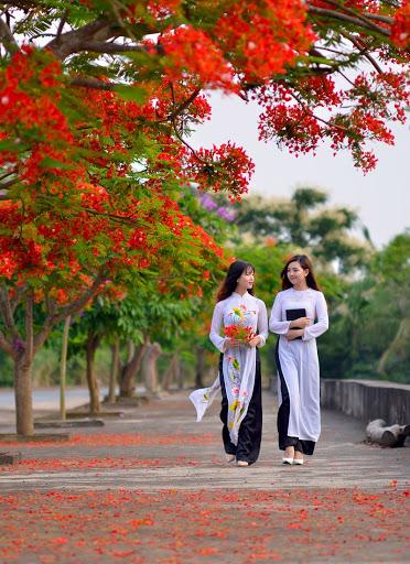 Hình ảnh hai thiếu nữ đi nhặt hoa phượng