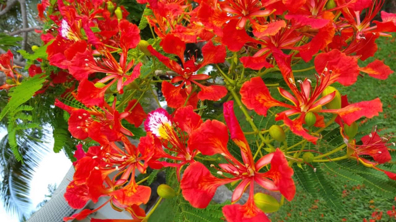 Hình ảnh hoa hượng thắm cực đẹp