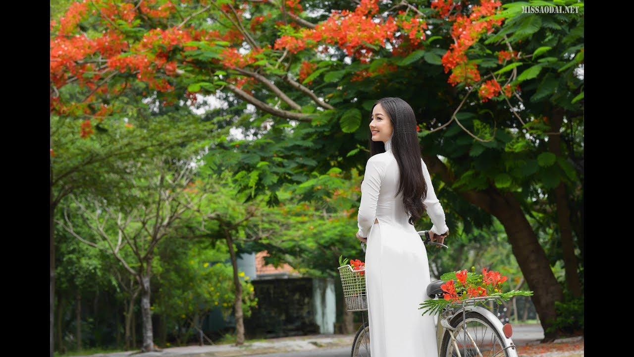Hình ảnh hoa phượng thắm và áo dài cực đẹp