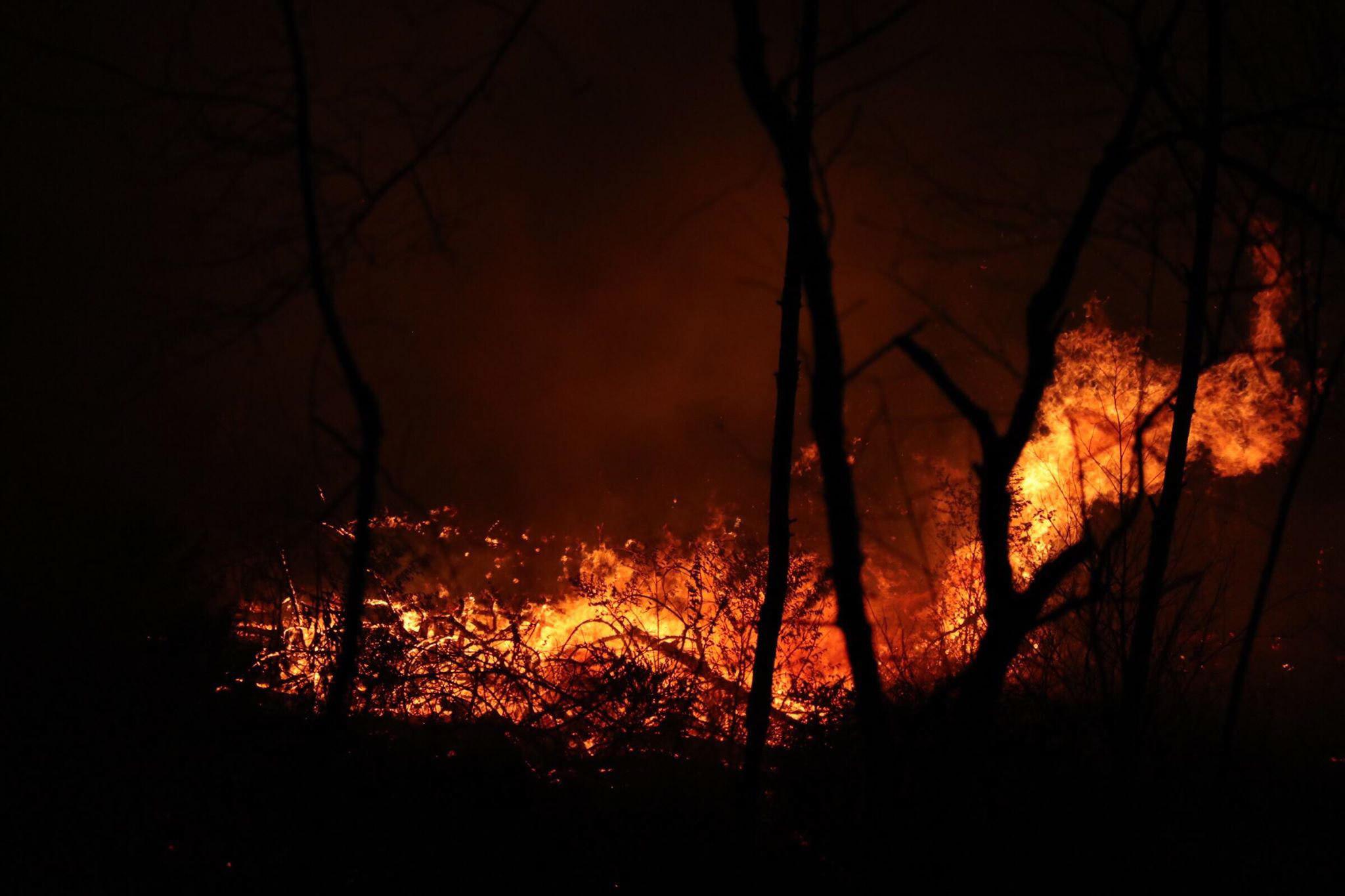 Hình ảnh ngọn lửa bùng cháy trong rừng