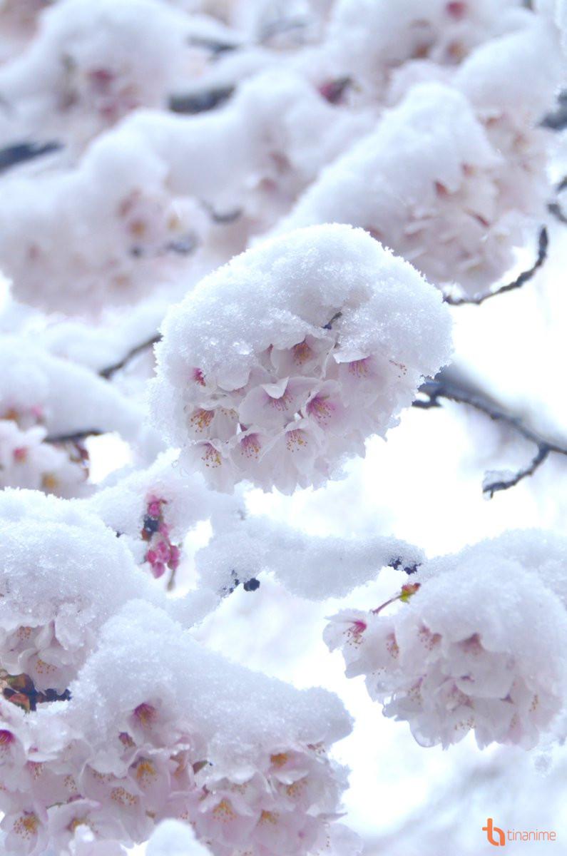 Hình ảnh những bông tuyết tuyệt đẹp