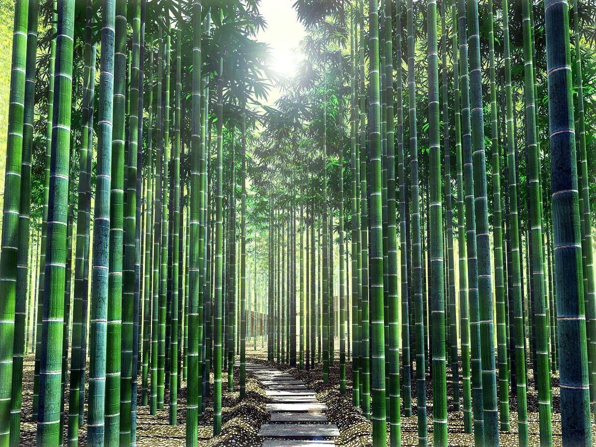 Hình ảnh những hàng cây tre xanh rì cực đẹp