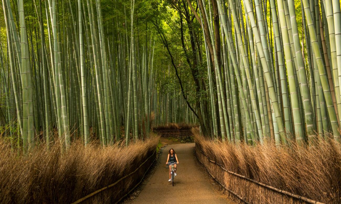 Hình ảnh những làng tre và cô gái đi xe đạp