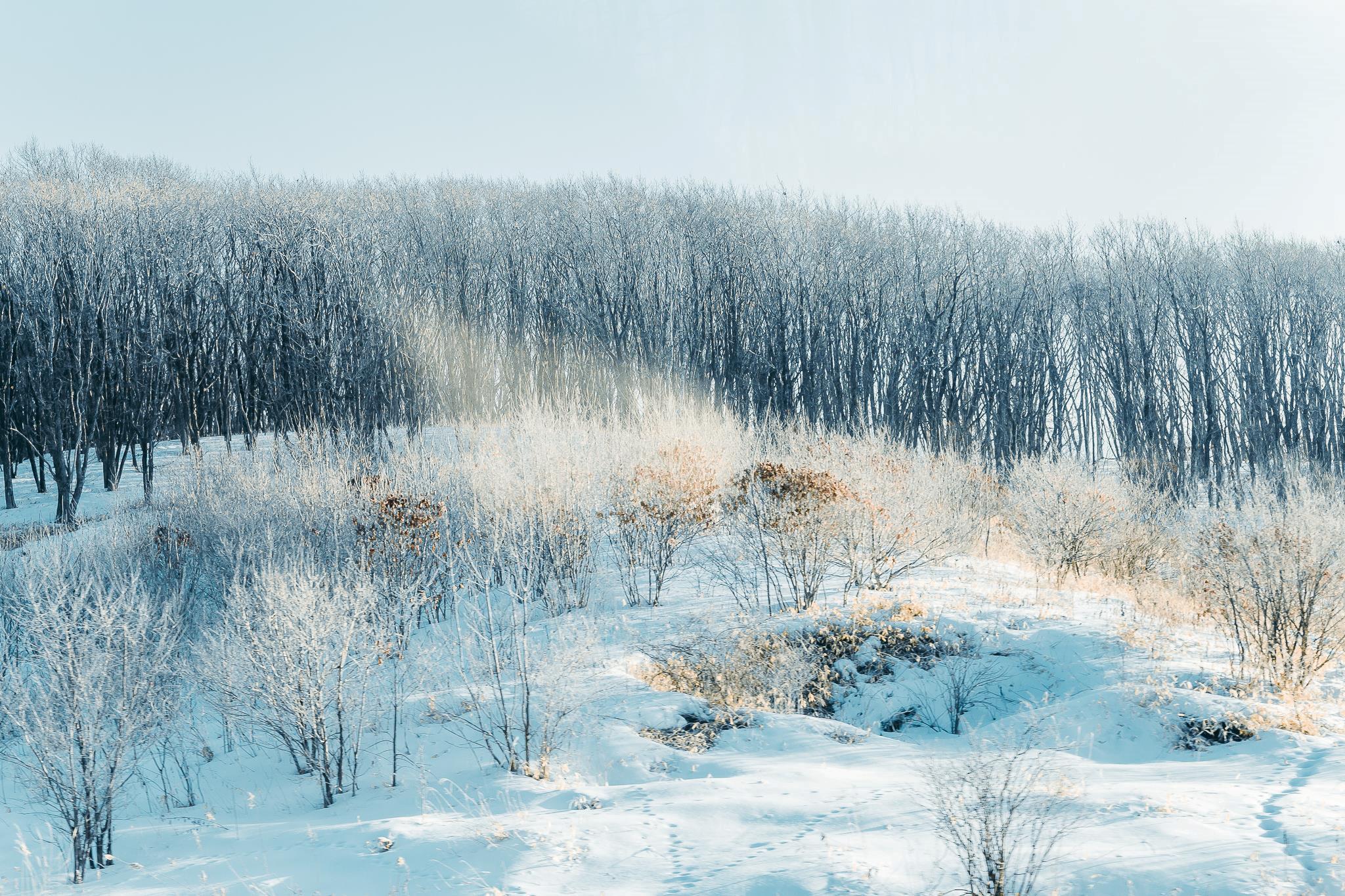Hình ảnh rừng cây tuyết phủ