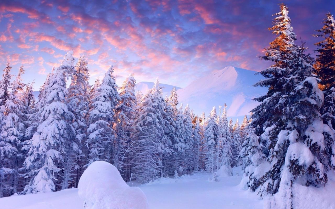 Hình ảnh rừng thông tuyết rơi phủ kín