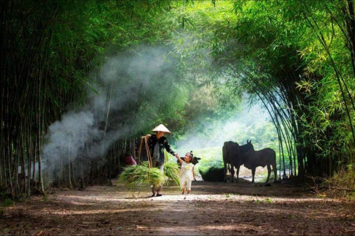 Hình ảnh tre làng