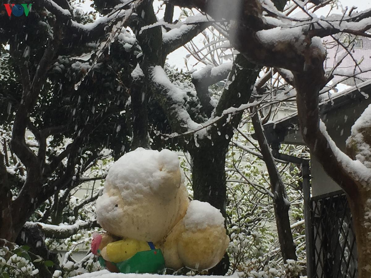 Hình ảnh tuyết phủ cực đẹp