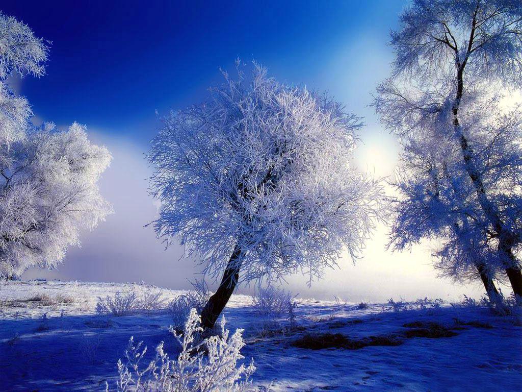 Hình ảnh vùng đất và cây tuyết phủ