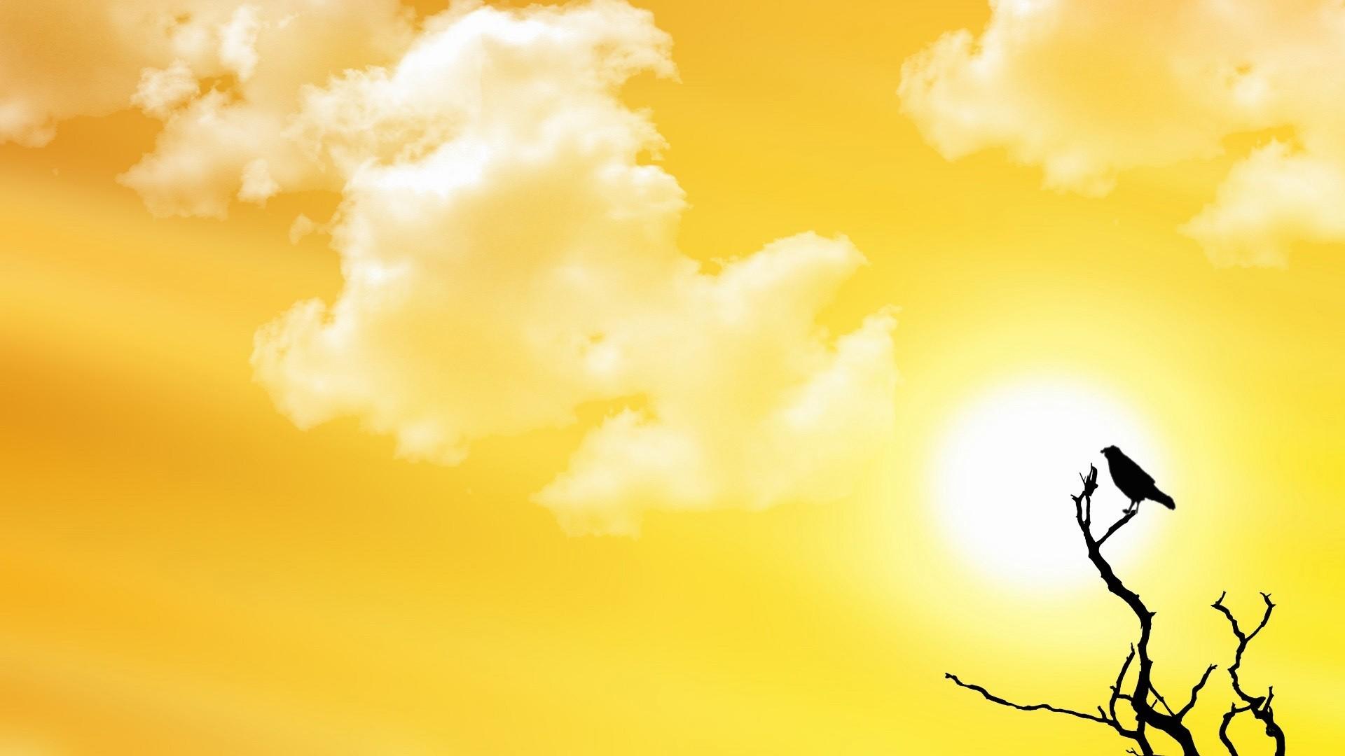 Hình nền màu trời vàng và cành cây chim đậu