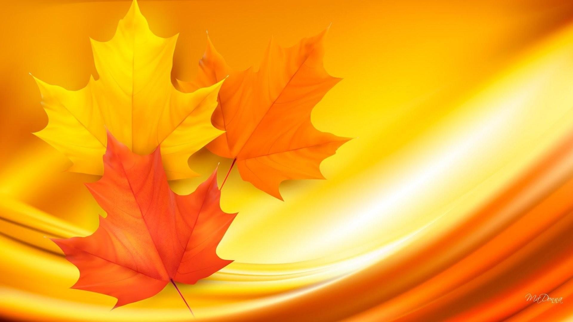 Hình nền vàng lá phong cực đẹp