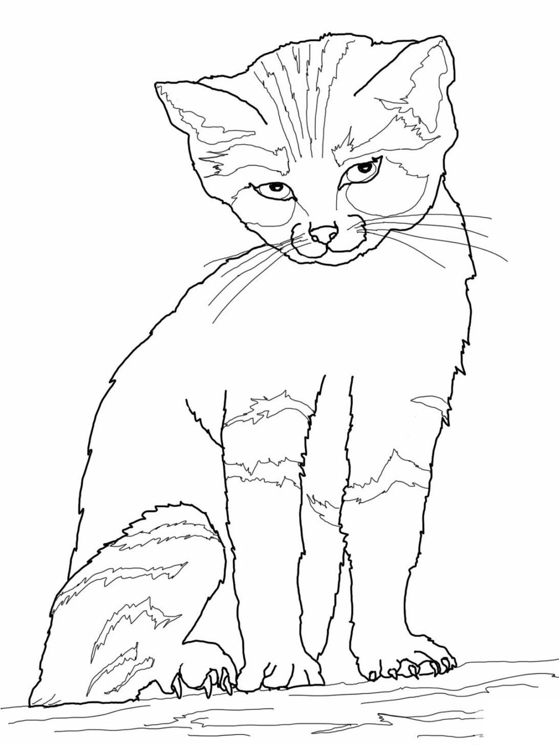 Tranh tô màu chú mèo cực đẹp