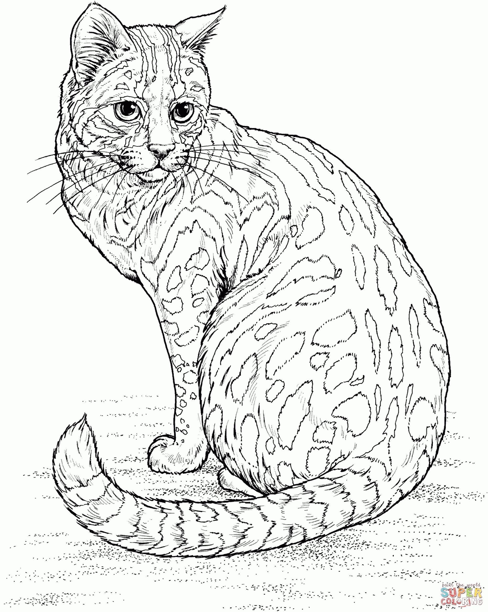 Tranh tô màu chú mèo cực ngầu