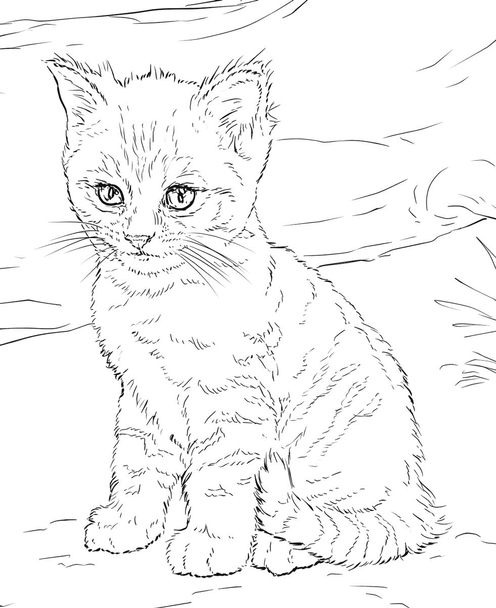 Tranh tô màu chú mèo lông dài xinh đẹp