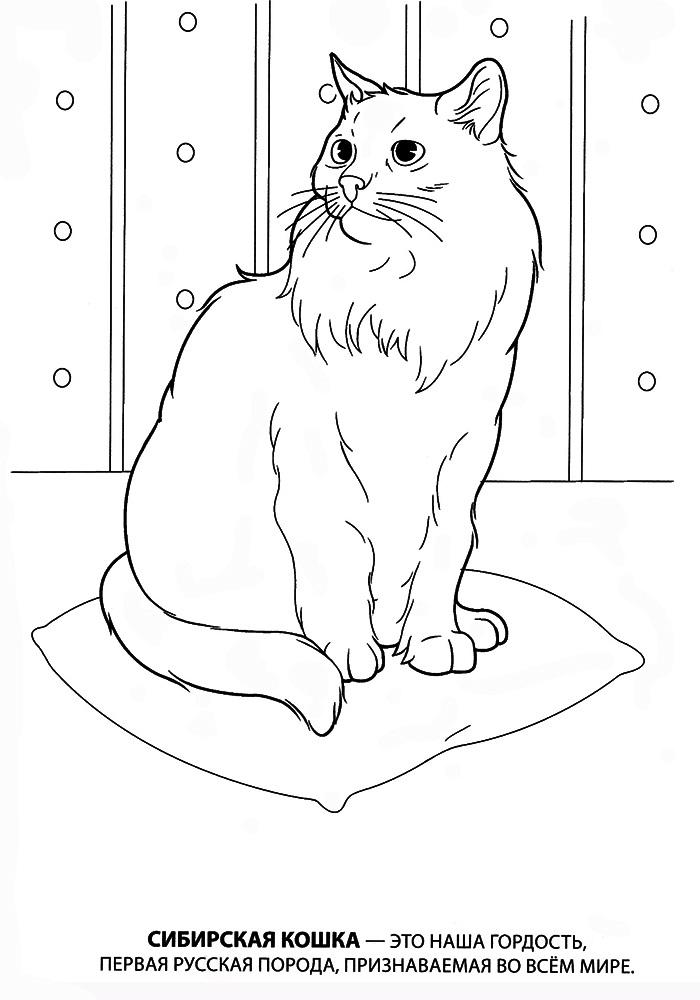 Tranh tô màu chú mèo lông xù xinh đẹp