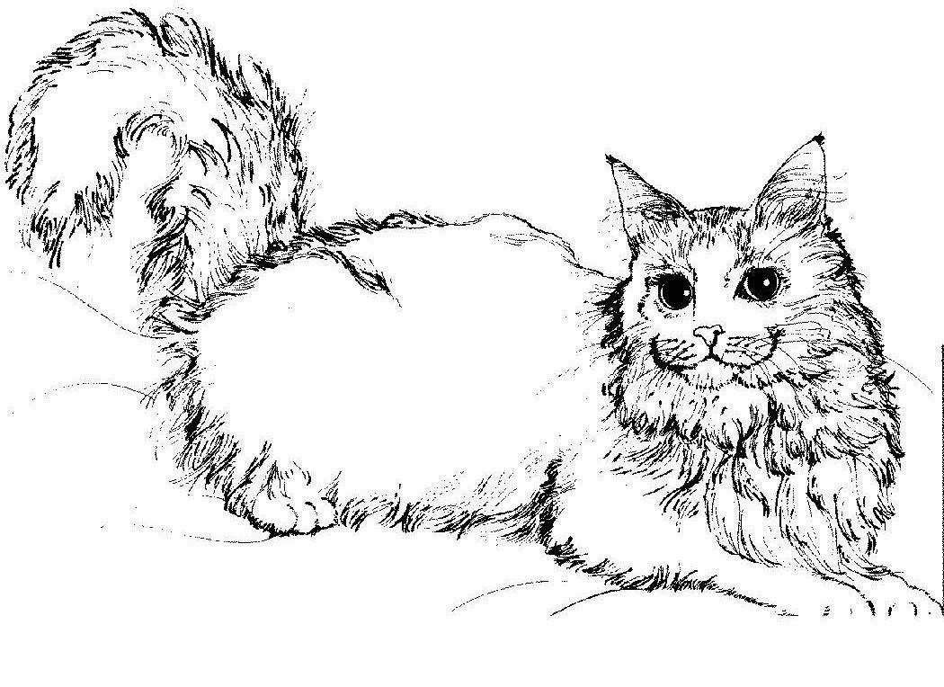 Tranh tô màu chú mèo Nga lông dài
