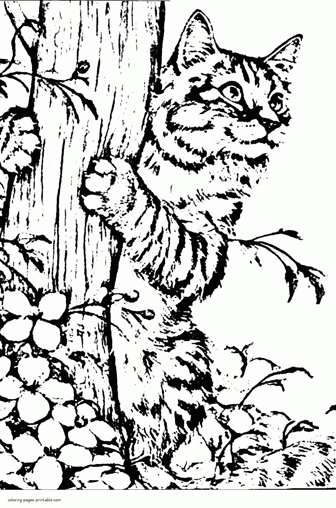 Tranh tô màu chú mèo ôm cây cực xinh