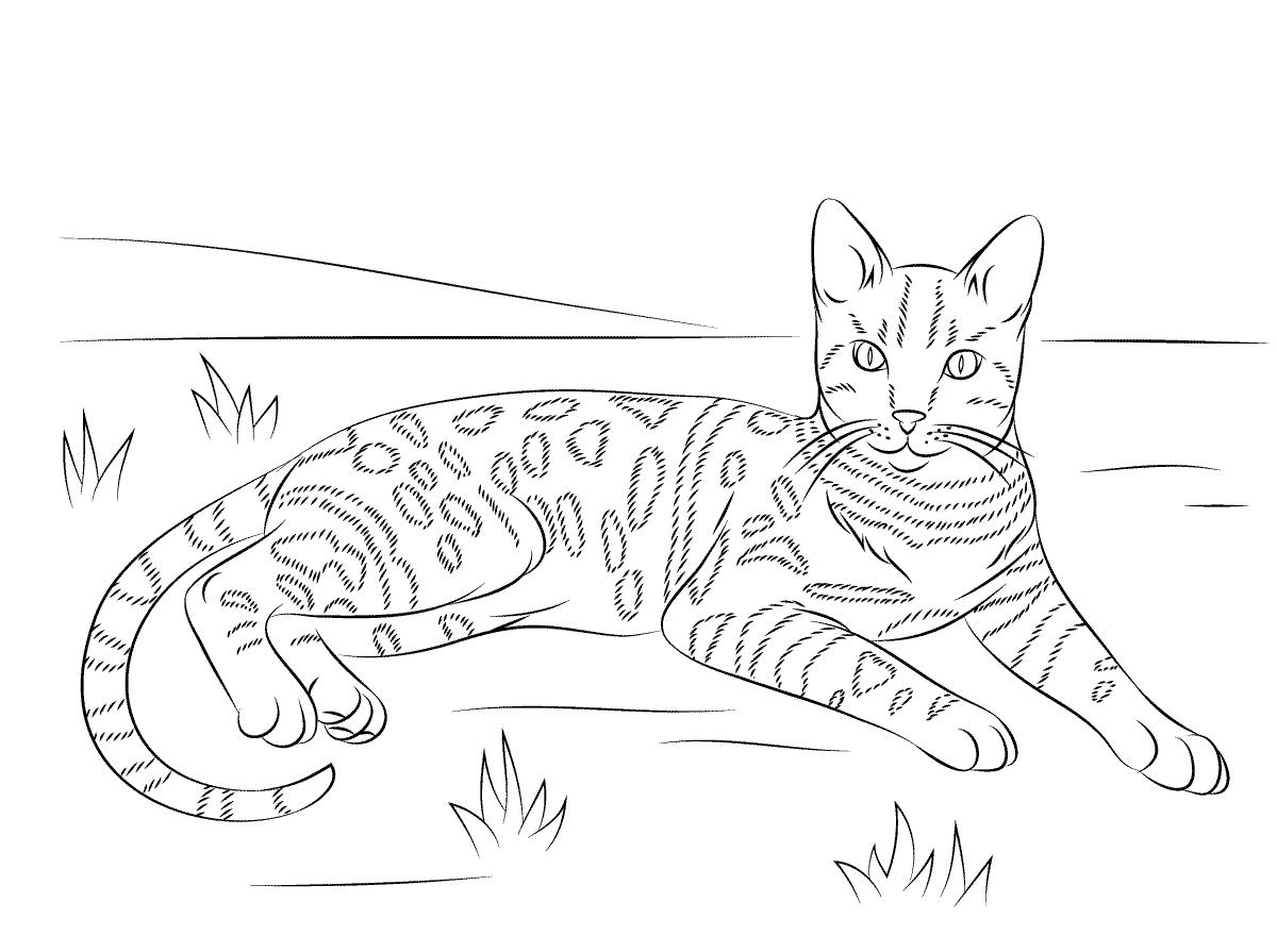 Tranh tô màu con mèo họa tiết báo cực đẹp
