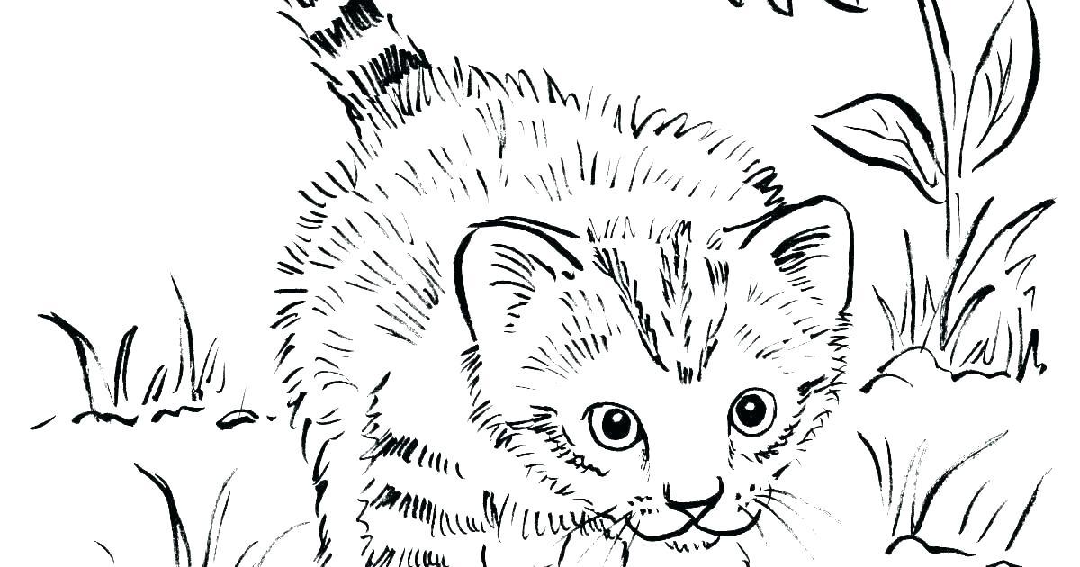 Tranh tô màu con mèo lông xù đáng yêu