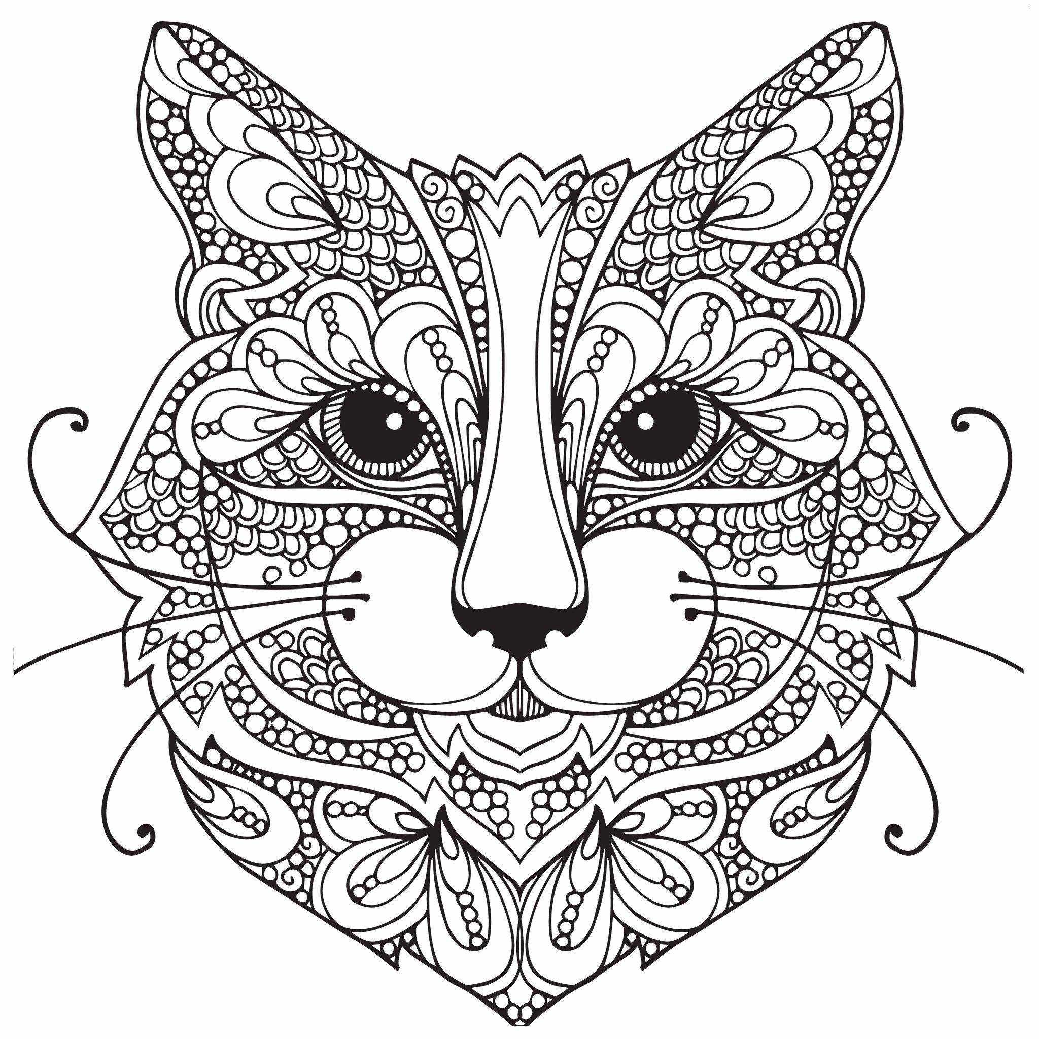 Tranh tô màu mặt mèo họa tiết rất đẹp