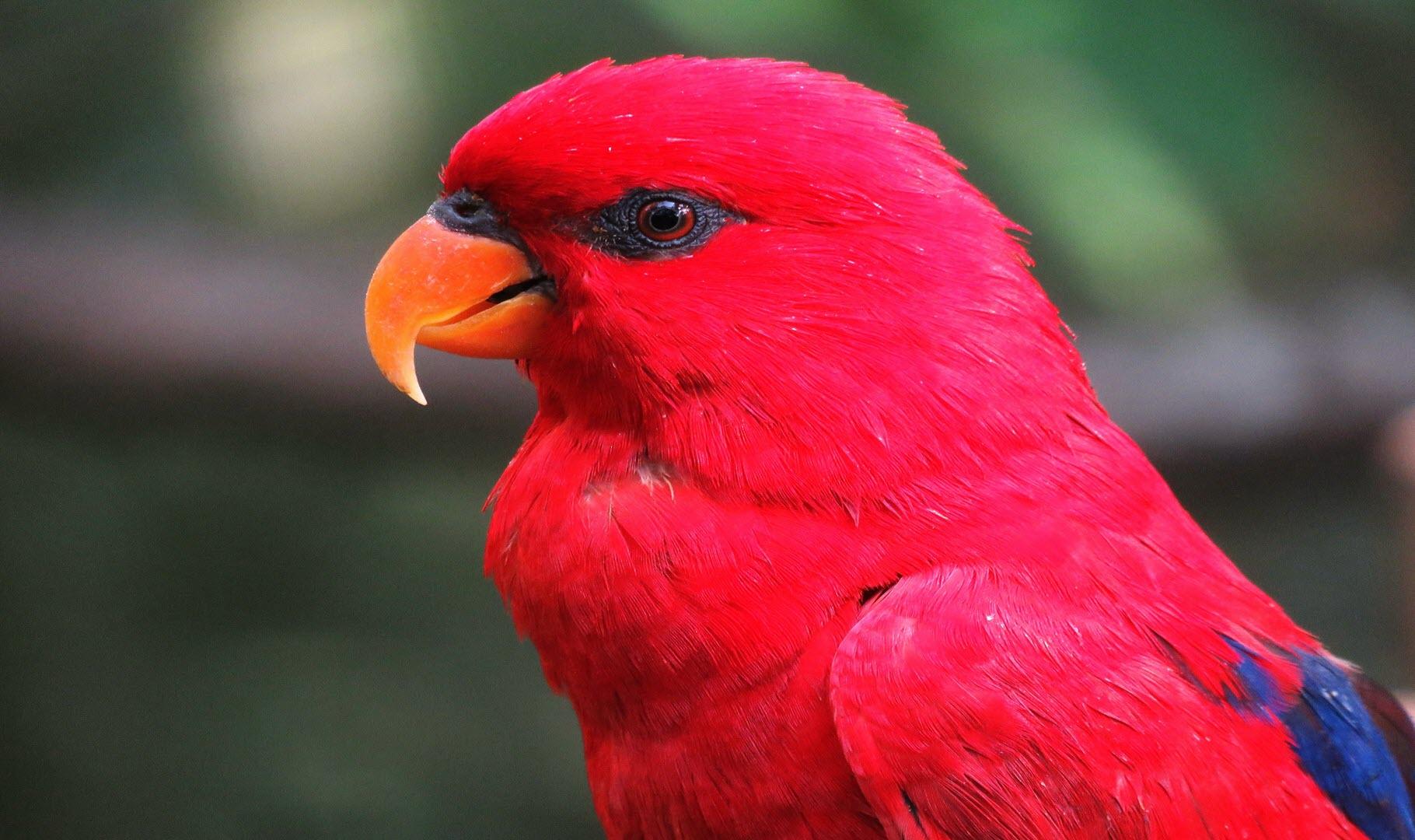 Ảnh nền màu đỏ đơn giản cực chất