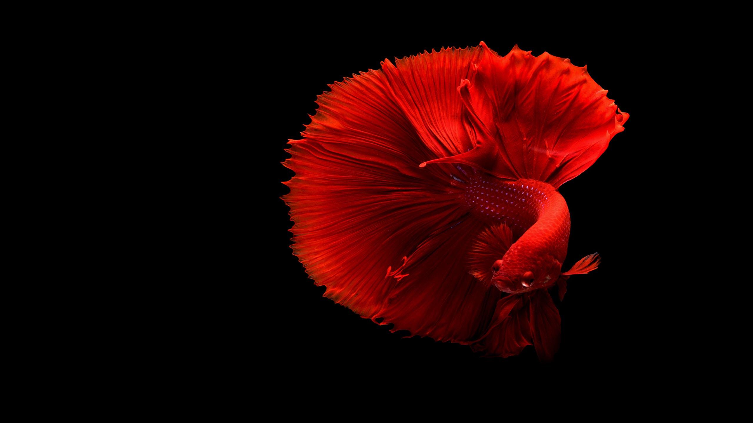 Hình nền màu đỏ đẹp nhất