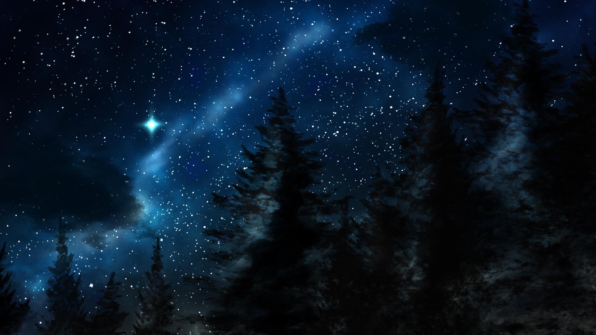 Ảnh bầu trời đêm đầy sao trong rừng thông