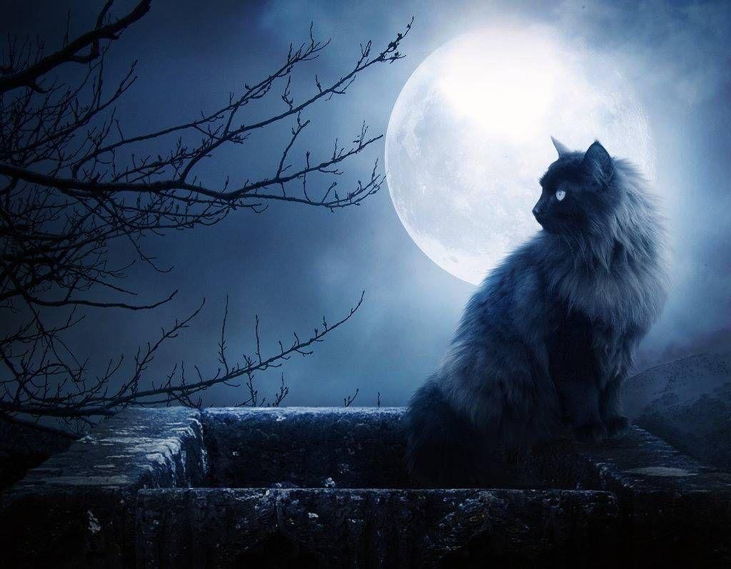 Ảnh con mèo và mặt trăng
