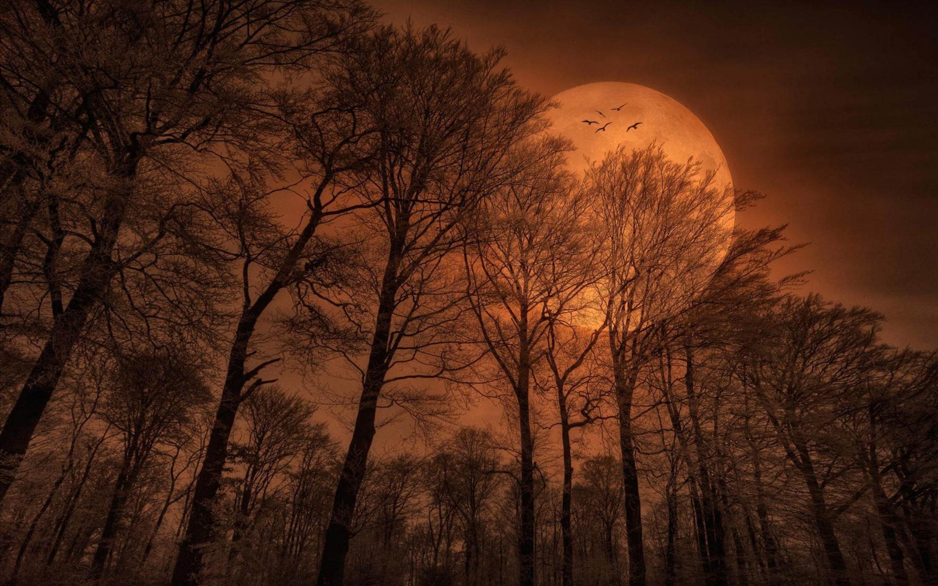 Ảnh mặt trăng trong rừng lãng mạn nhất