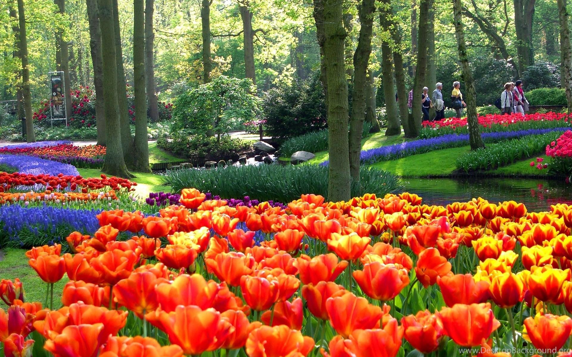 Khu vườn hoa Tulip đẹp nhất