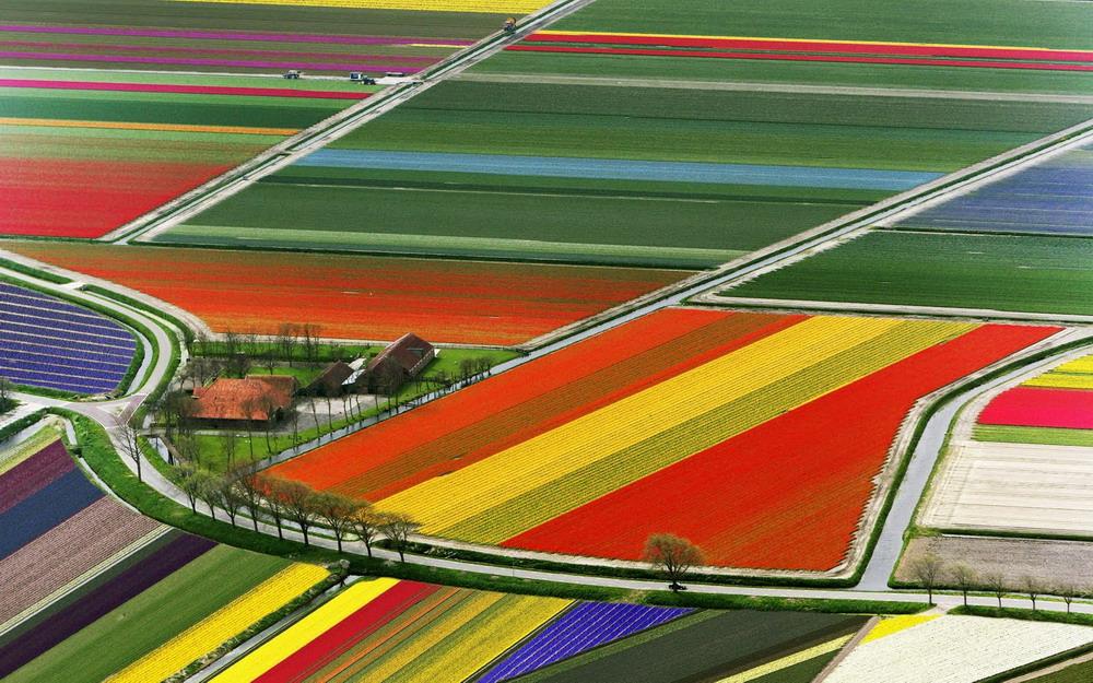 Những cánh đồng hoa Tulip Hà Lan chụp từ trên cao