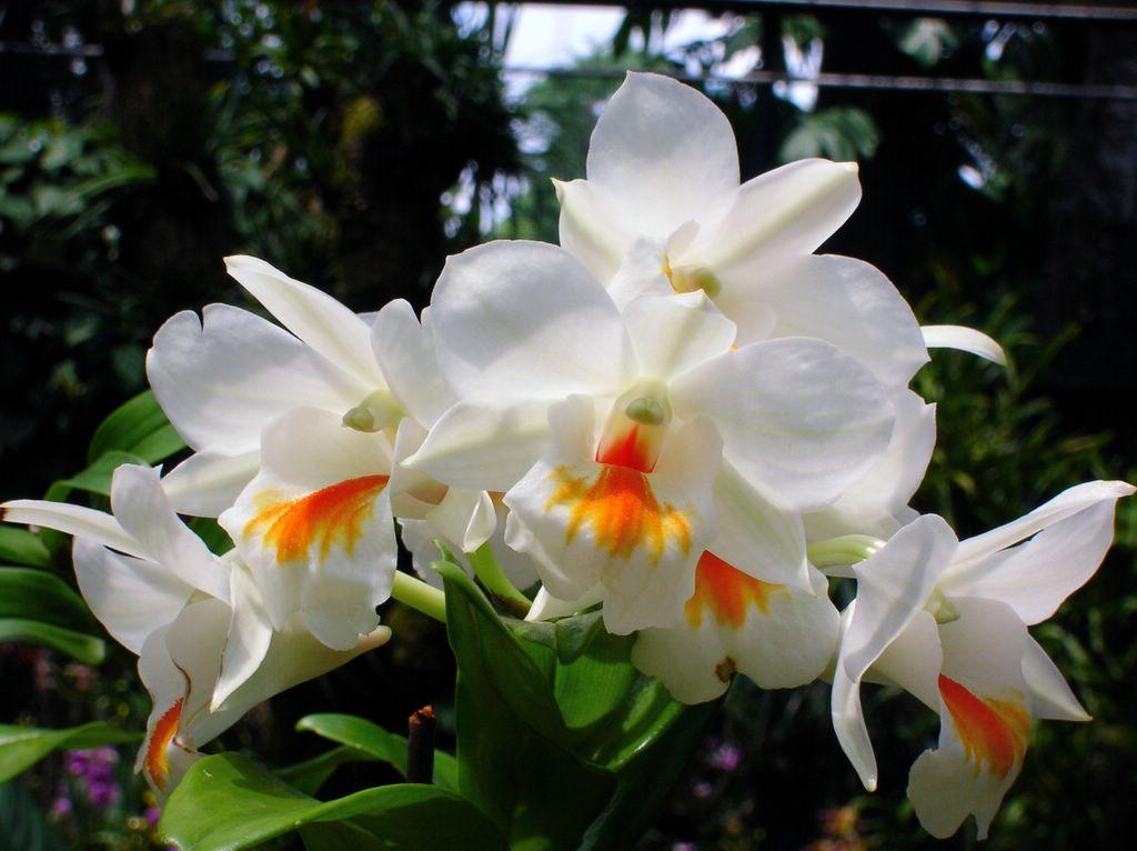 Ảnh các loài hoa lan đẹp nhất